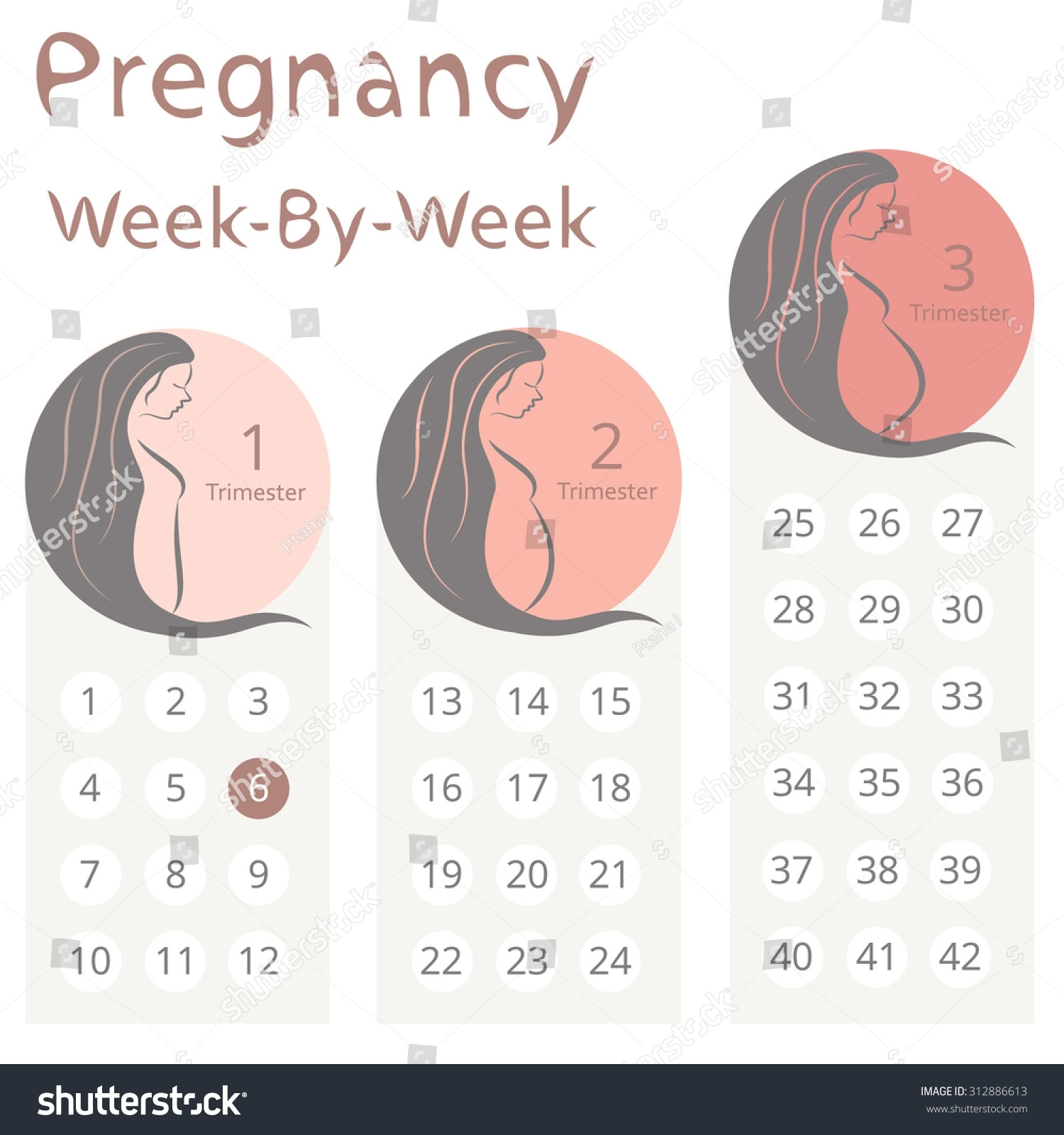 Pregnancy Weekweek Calendar Trimesters Stock Vector (Royalty